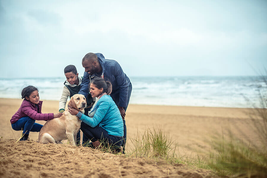 Mother, father, young son and young daughter all sit around stroking their pet dog whilst on a beach representing Simplyhealth's corporate Denplan family cover